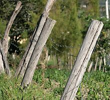 Barbed Wire Fence in a Field by rhamm