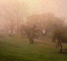 Arboretum in fog by Mike Bachman