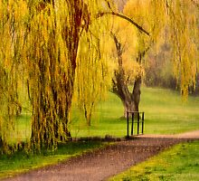 Willows In Spring by Mike Bachman