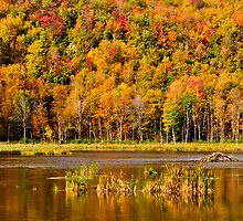 Autumn pond by Mike Bachman