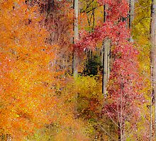 Fall's  colors. by jhawa