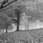 Autumn Fog B&W by elasita