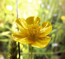 Buttercup by caitlin2005