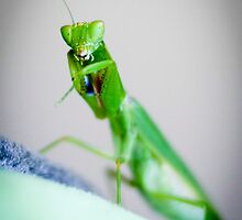 Praying Mantis by dioptrewho