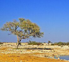 Tree, Okaukuejo Lagoon, Namibia by Margaret  Hyde