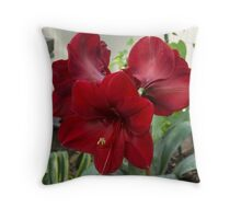 Christmas Red Amaryllis Flowers Throw Pillow
