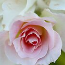 Softly Pink by TeAnne