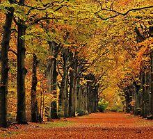 Walking through autumn's colour palast again by jchanders