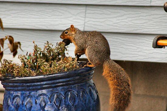 Pot Topper Squirrel by Keala