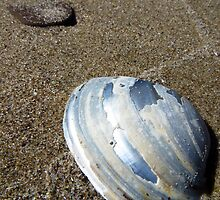 Lake Erie Mussel Shell by SRowe Art