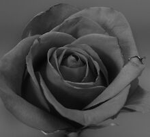 Black and grey rose by jmactattoo