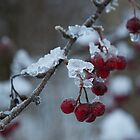 Frozen berries by Algot Kristoffer Peterson