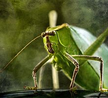 Giant Katydid by CindiR