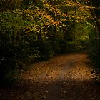 Autumn Woodland Path by Richard Hepworth