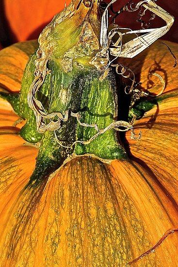 Fancy Pumpkin Stem by Cee Neuner