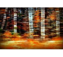 Time Flies Through Forests Changing Photographic Print