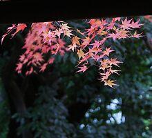 Autumn overhang by DerekEntwistle