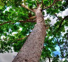Trees 7 by Skyangel