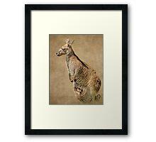 Hoo Roo Kangaroo Framed Print