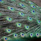 Peacock Feathers 2 by Bami