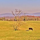 Tree In The Pasture by James Brotherton