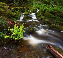 Woodland Falls by Jeanie
