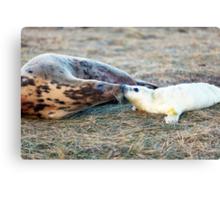 Donna Nook Grey Seal Colony  Canvas Print