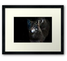 Wolves on alert at night    (See Large !!) Framed Print