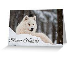 Arctic Wolf Christmas Card Italian 1 Greeting Card