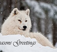 Arctic Wolf Seasons Card 1 by WolvesOnly