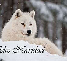 Arctic Wolf Christmas Card Spanish 1 by WolvesOnly