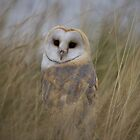 Barn Owl by Jane Horton
