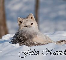 Arctic Wolf Christmas Card Spanish 3 by WolvesOnly
