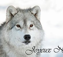 Arctic Wolf Christmas Card French 5 by WolvesOnly
