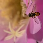 Hover Fly on Pink Cactus Flower by Qnita