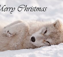 Arctic Wolf Christmas Card English 6 by WolvesOnly