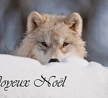Arctic Wolf Christmas Card French 7 by WolvesOnly