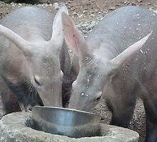 Noses in the bowl.  by Sandra Caven