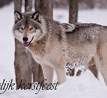 Timber Wolf Christmas Card Dutch 3 by WolvesOnly