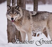 Timber Wolf Seasons Card 3 by WolvesOnly