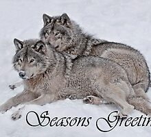Timber Wolf Seasons Card 2 by WolvesOnly