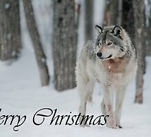 Timber Wolf Christmas Card English 4 by WolvesOnly