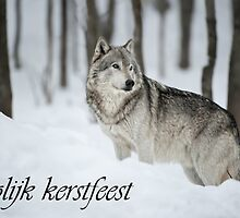 Timber Wolf Christmas Card Dutch 6 by WolvesOnly