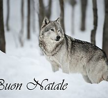 Timber Wolf Christmas Card Italian 6 by WolvesOnly