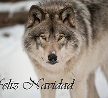 Timber Wolf Christmas Card Spanish 8 by WolvesOnly