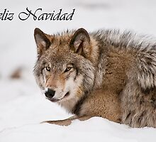 Timber Wolf Christmas Card Spanish 11 by WolvesOnly