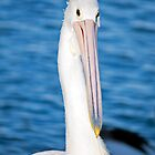 Portrait of Pelican by jayneeldred