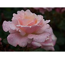 Rose and Rain in Pink Photographic Print