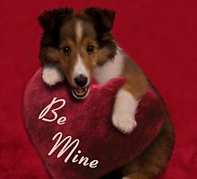 Be Mine Sheltie Puppy by jkartlife