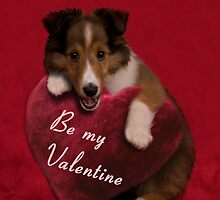 Be my Valentine Sheltie Puppy by jkartlife